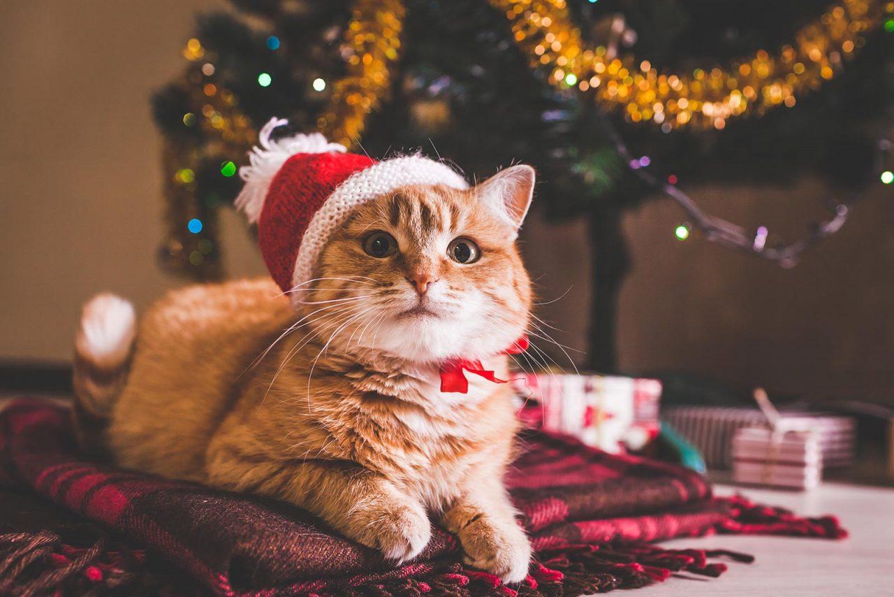Τρεις πρωτότυπες χριστουγεννιάτικες συνταγές για τη γάτα μας
