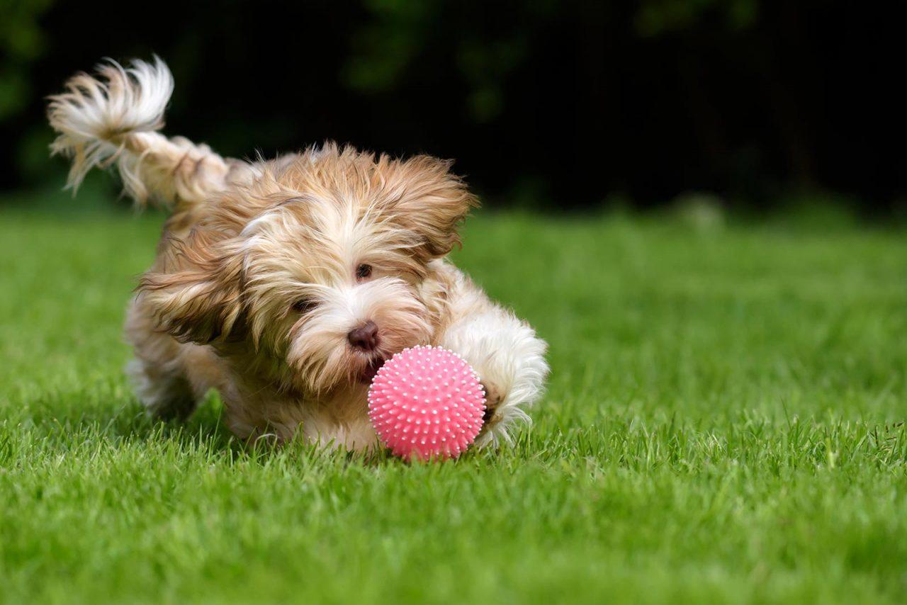 Γιατί δεν αρπάζουμε κάτι από το στόμα του σκύλου – Πώς τον «πείθουμε» να το αφήσει