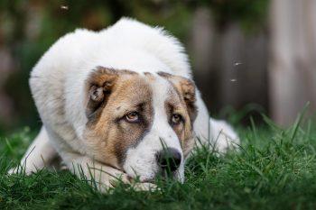 Σκύλος με καρδιοπάθεια: Το διαιτολόγιο που θα τον βοηθήσει