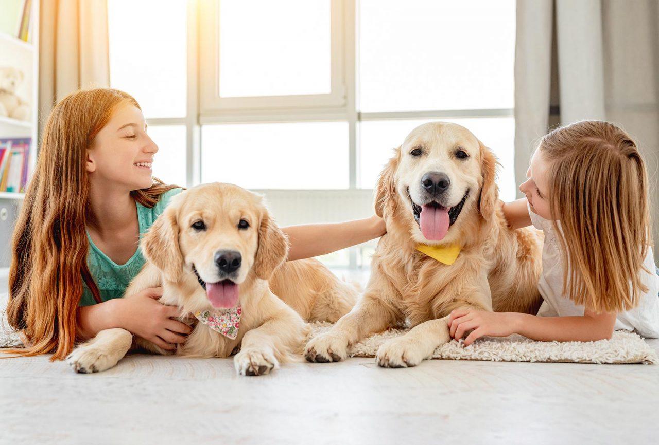Πόσο καλή παρέα θα είναι για τον γεράκο σκύλο ένα κουτάβι; Δείτε την απάντηση