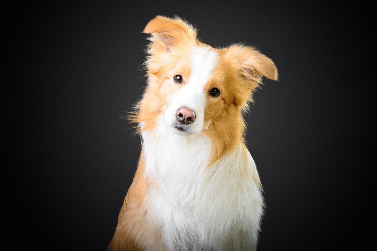 Πέντε κινήσεις που κάνουν τον σκύλο αξιολάτρευτο – Πώς ερμηνεύονται