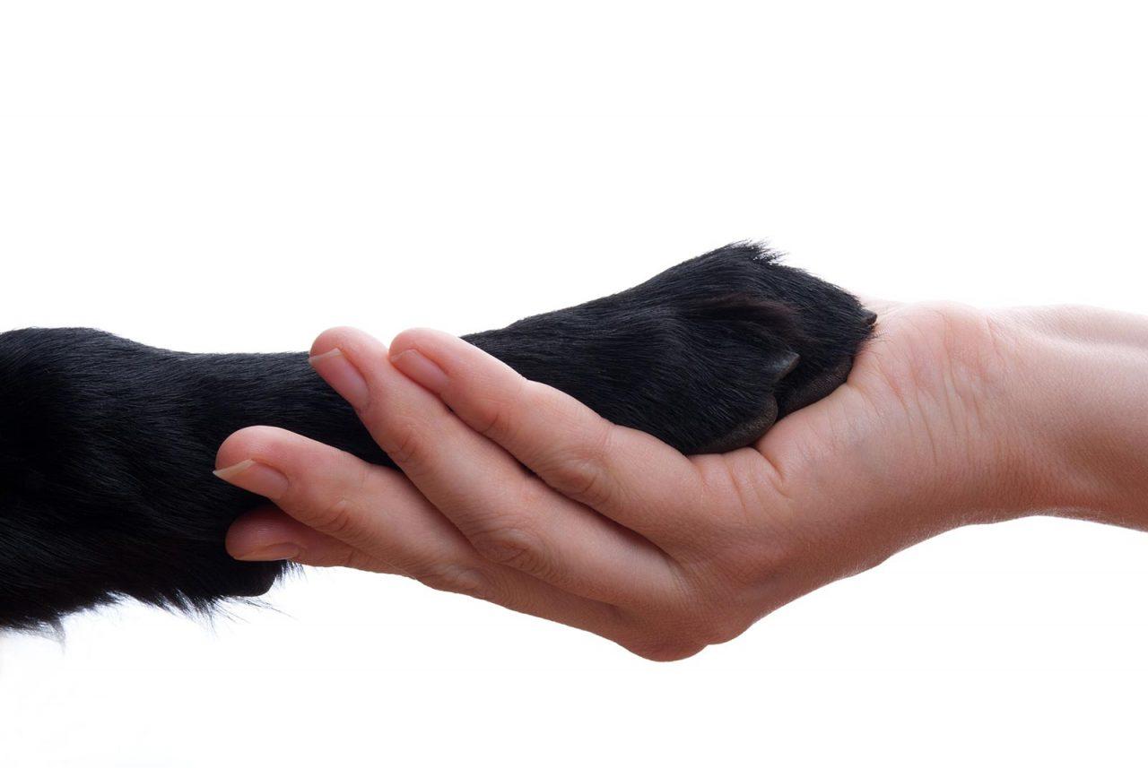 Σκούμπυ: Ο σκυλάκος που πάλεψε για τη ζωή του αναζητά σπίτι
