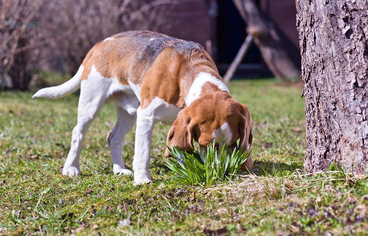 Σκύλος: Το έντομο που του κινεί το ενδιαφέρον και σε τι κίνδυνο μπορεί να τον βάλει