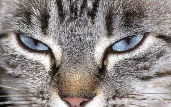 Πόσες ώρες την ημέρα κοιμάται η γάτα; Δεν φαντάζεστε την απάντηση
