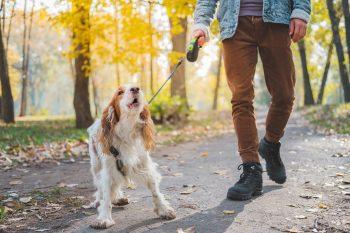 Όλοι οι λόγοι που ο σκύλος γαβγίζει στους άλλους σκύλους: Πώς να το αντιμετωπίσετε