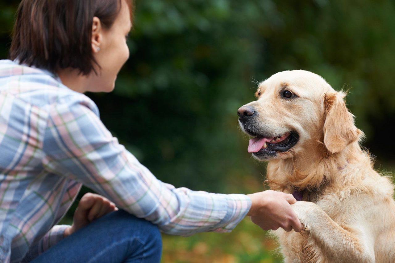 Ορμάτε να χαϊδέψετε τον άγνωστο σκυλάκο που συναντήσατε; Γιατί είναι λάθος