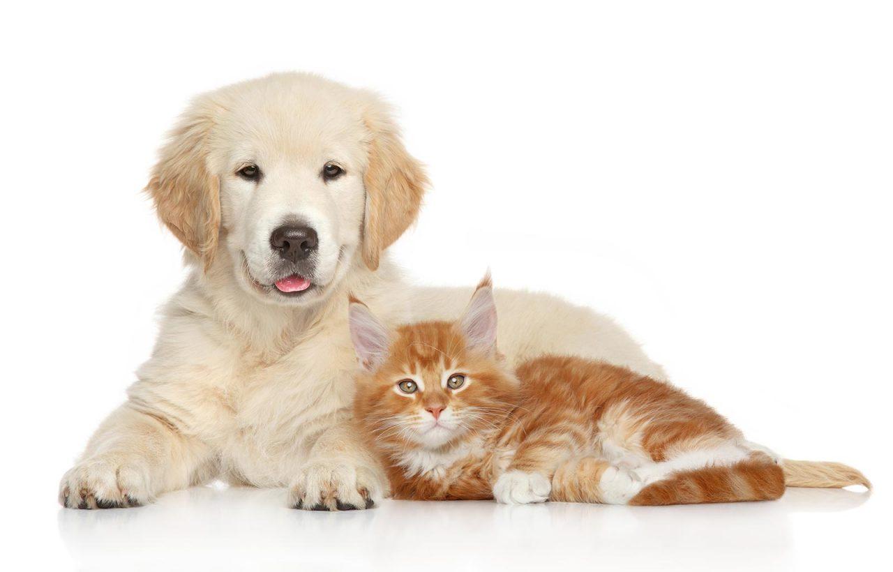 Αντιμετωπίστε το πιο ενοχλητικό παράσιτο που ταλαιπωρεί το σκύλο και τη γάτα