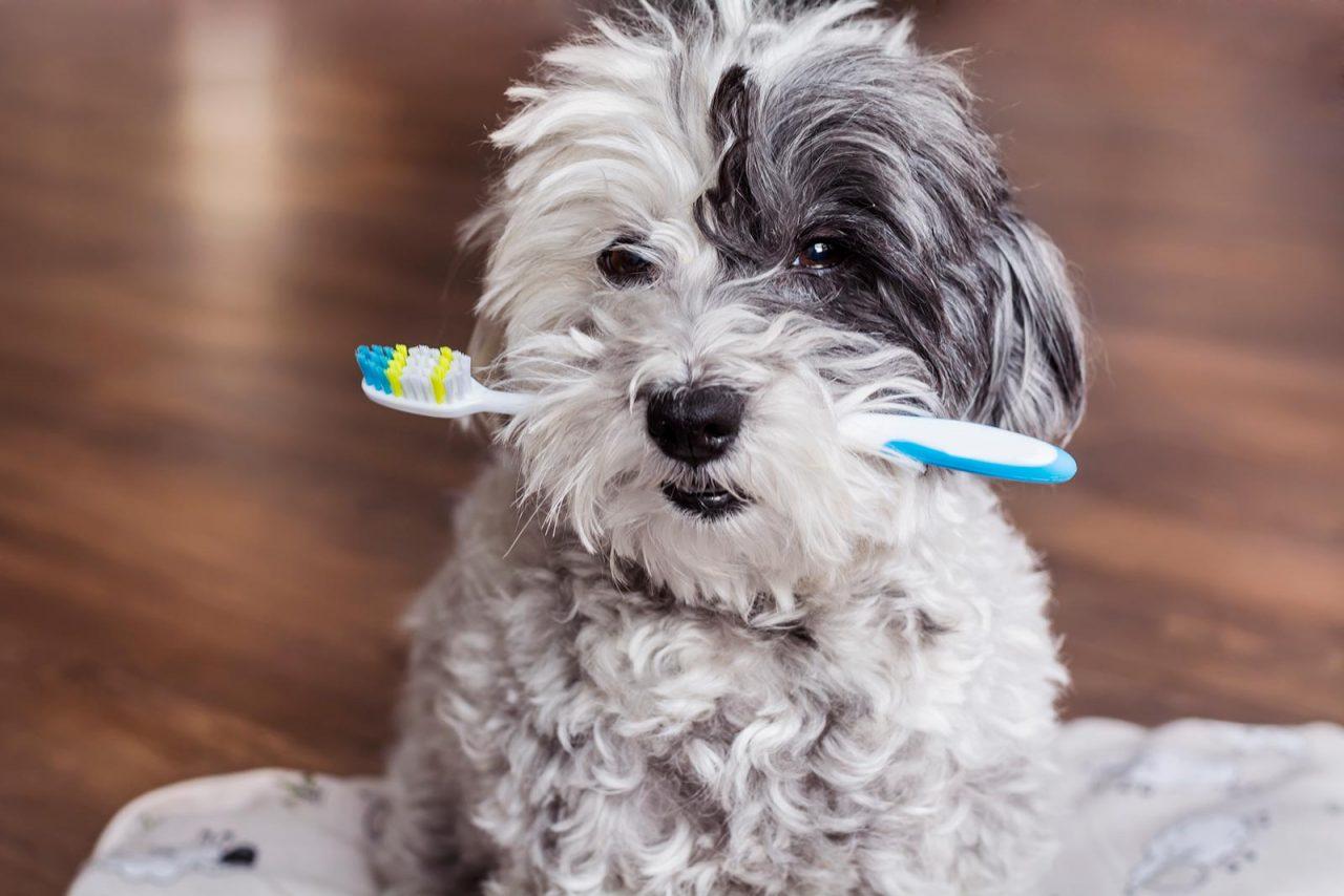 Τα σημάδια που αποκαλύπτουν ότι ο σκύλος έχει πρόβλημα με τα δόντια του