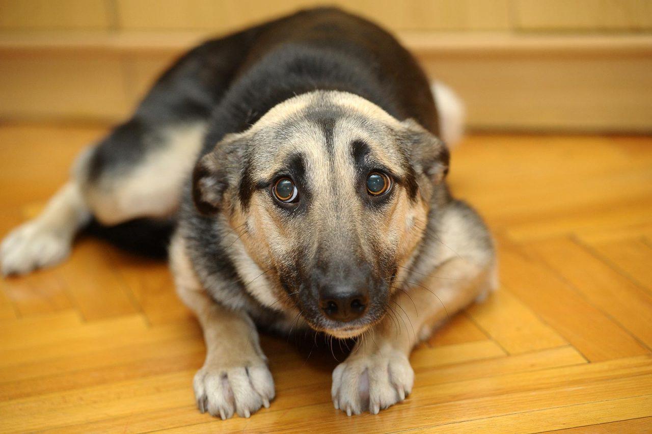 Όλοι οι λόγοι που ο σκύλος αρνείται να πάει βόλτα – Ναι, συμβαίνει!