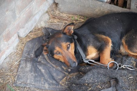Κακοποίηση ζώου: Το προφίλ των δραστών – Τι να κάνετε