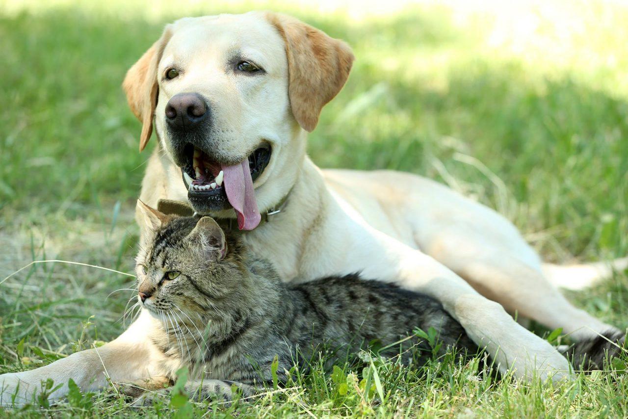 Σκύλος και γάτα: Μια ομοιότητα και 10 διαφορές – Τις γνωρίζετε;