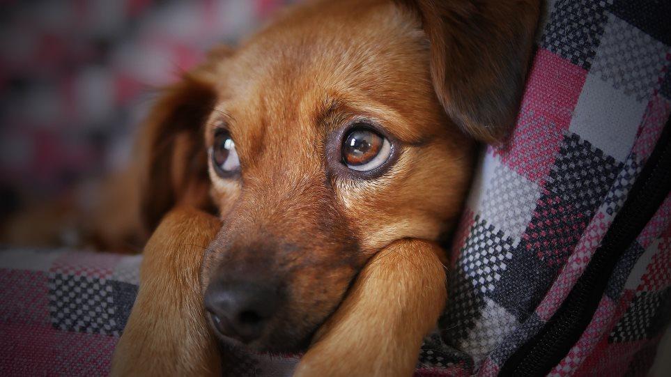 Κορωνοϊός: Η Ρωσία παρήγαγε την πρώτη παρτίδα εμβολίων κατά της Covid-19… για ζώα