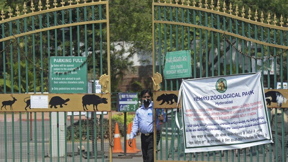 Ινδία: Θετικά στον κορωνοϊό οκτώ λιοντάρια σε ζωολογικό κήπο