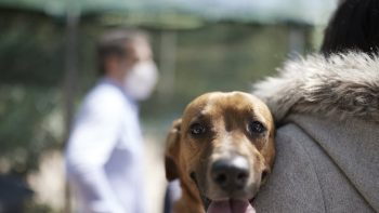 Ζώα συντροφιάς: Αυτό είναι το νομοσχέδιο – Όσα πρέπει να γνωρίζετε σε 18 ερωταπαντήσεις
