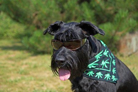 Ο ήλιος είναι σύμμαχος για την υγεία του σκύλου – Οι κίνδυνοι της υπερβολικής έκθεσης