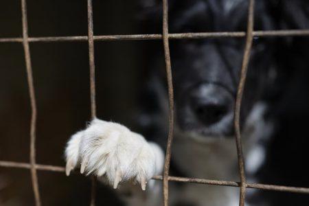 Τι αλλάζει με το νομοσχέδιο για τα ζώα συντροφιάς και τα αδέσποτα