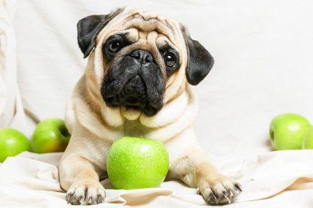 Το πασίγνωστο φρούτο που θωρακίζει την υγεία του σκύλου
