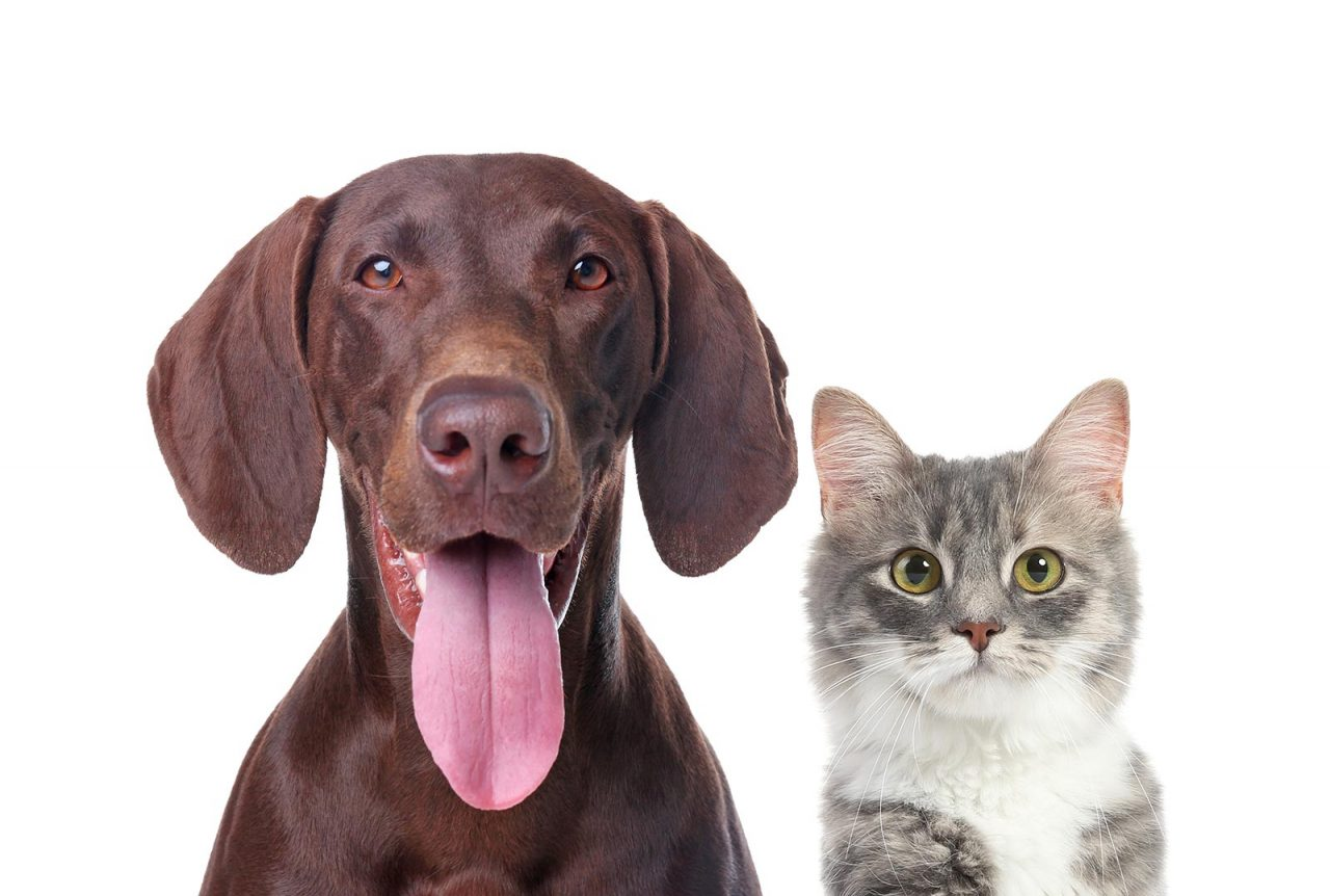 Όραση: Πόσα χρώματα βλέπει ο σκύλος και η γάτα