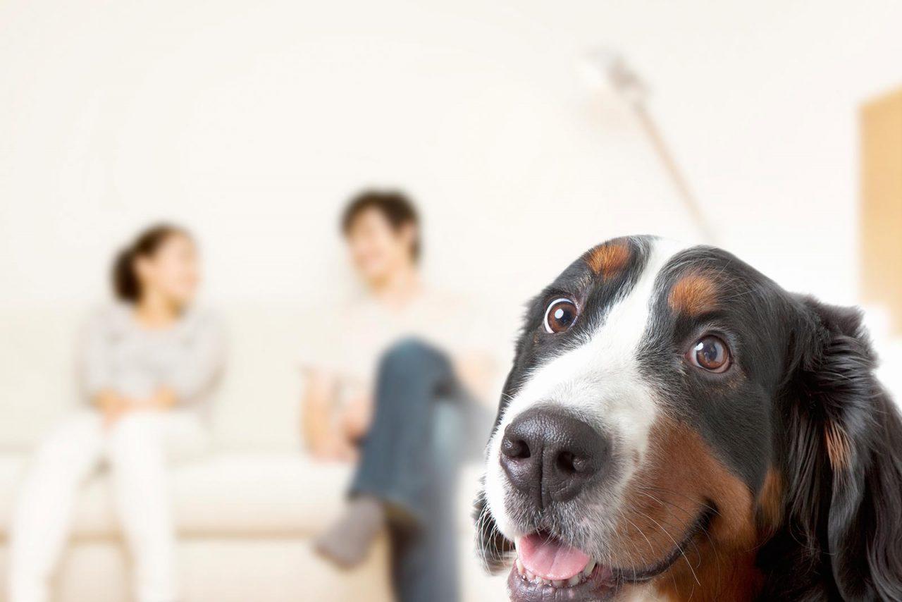 Είναι άτακτος ο σκύλος; Η τακτική που θα σας σώσει