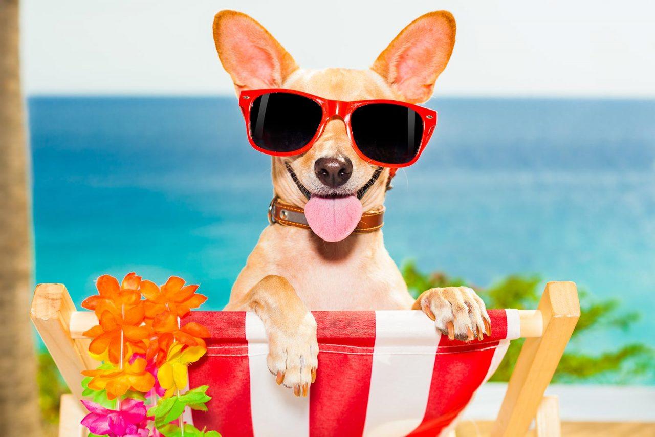 Ο σκύλος φοβάται τη θάλασσα; Κάντε τον να την αγαπήσει