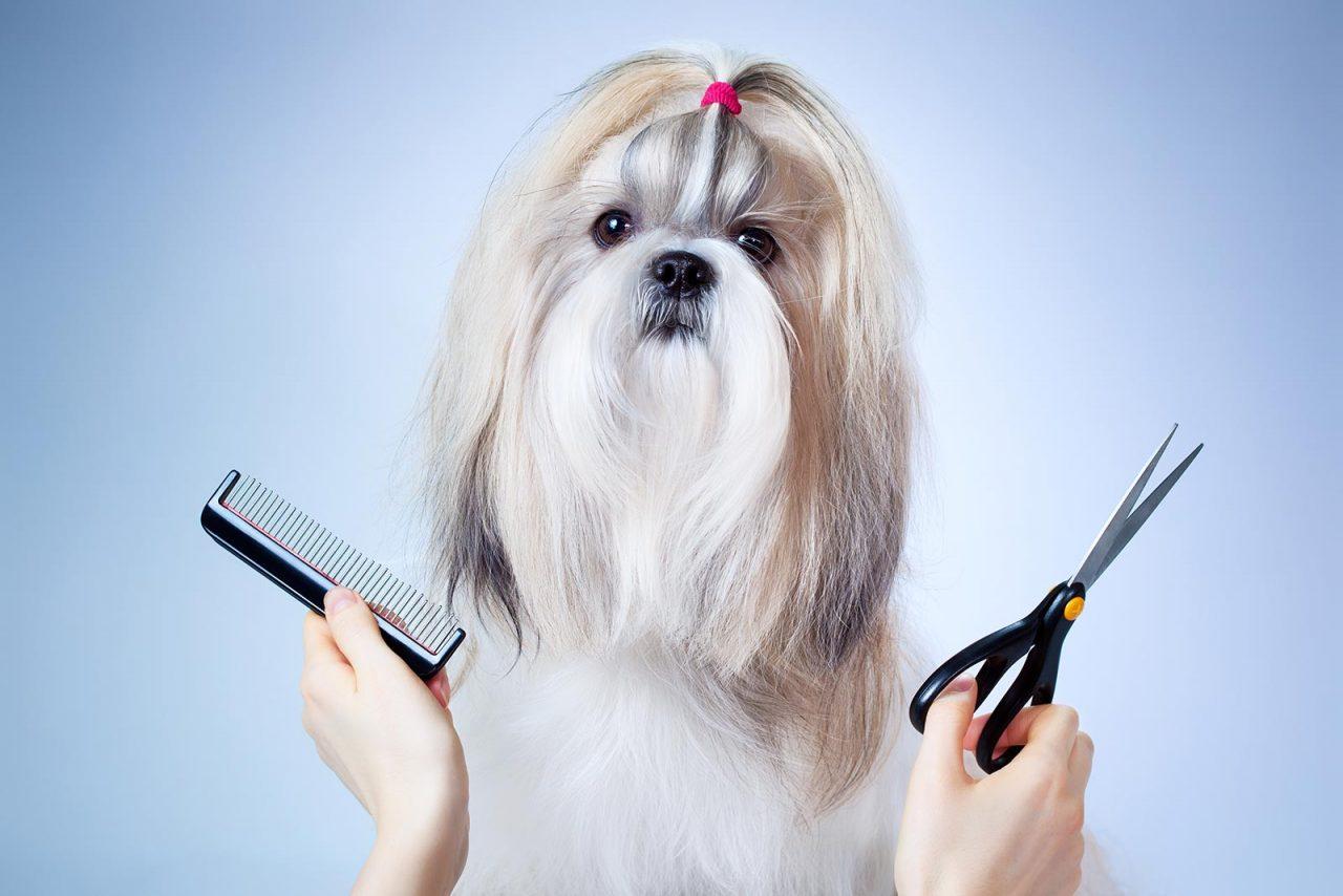 Πόσο καλή ιδέα είναι να ξυρίσουμε τον σκύλο για να τον δροσίσουμε