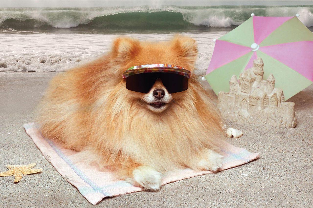 Σκύλος: Τι επιτρέπεται και τι απαγορεύεται στη θάλασσα και την παραλία – Πάρτε τα μέτρα σας