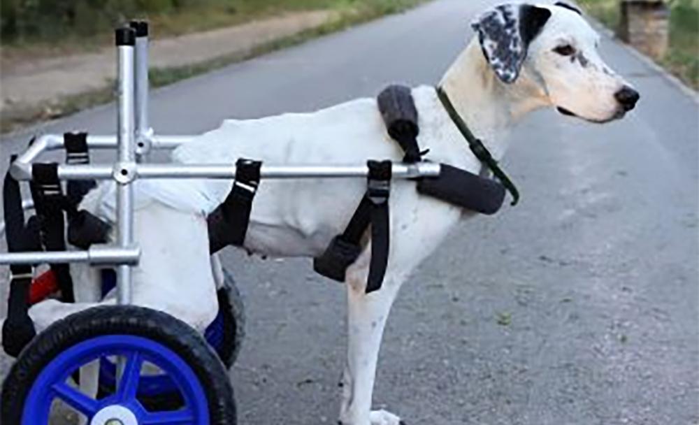 Τραυματισμένα ζωάκια: Το αμαξίδιο που τα βοηθά να περπατήσουν και τους χαρίζει αξιοπρέπεια