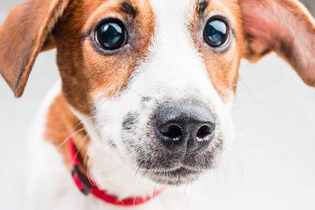 Διακοπές χωρίς τον σκύλο – Προετοιμάστε τον και αφήστε τον στα σωστά χέρια