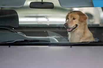 210729144714 dogcar