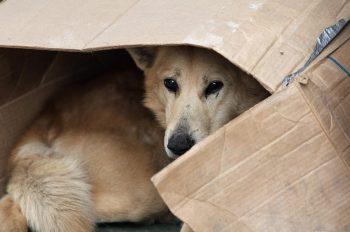 210729145719 dogstray