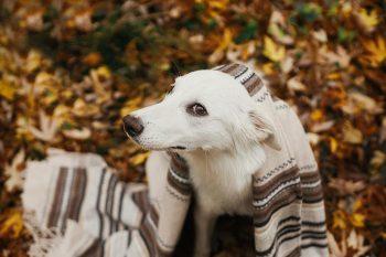 Πιστεύετε ότι ο σκύλος σας κάνει τον δύσκολο και «κρατάει μούτρα» – Δείτε τι ακριβώς συμβαίνει