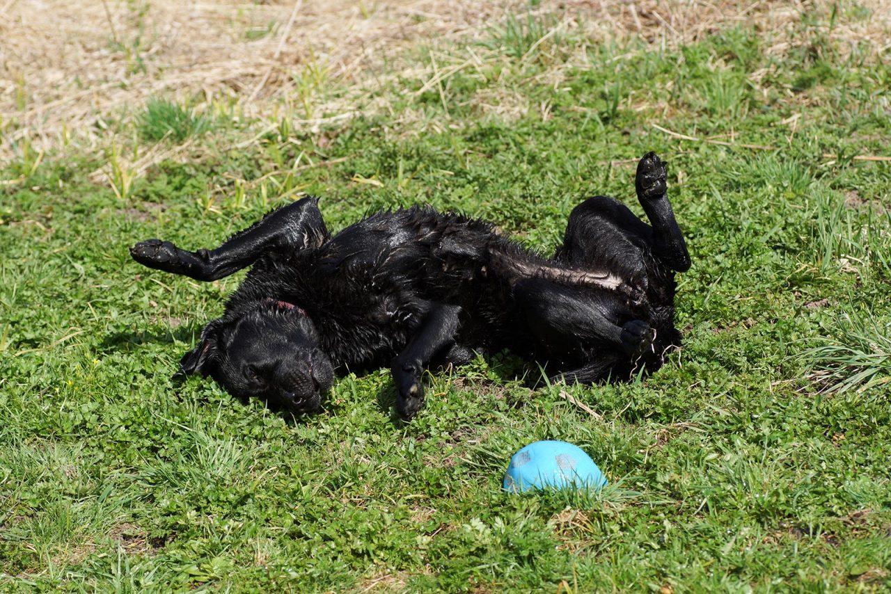 Σκύλος: Να γιατί τρίβεται στα πατώματα μετά το μπάνιο – Πώς να τον πλένετε σωστά