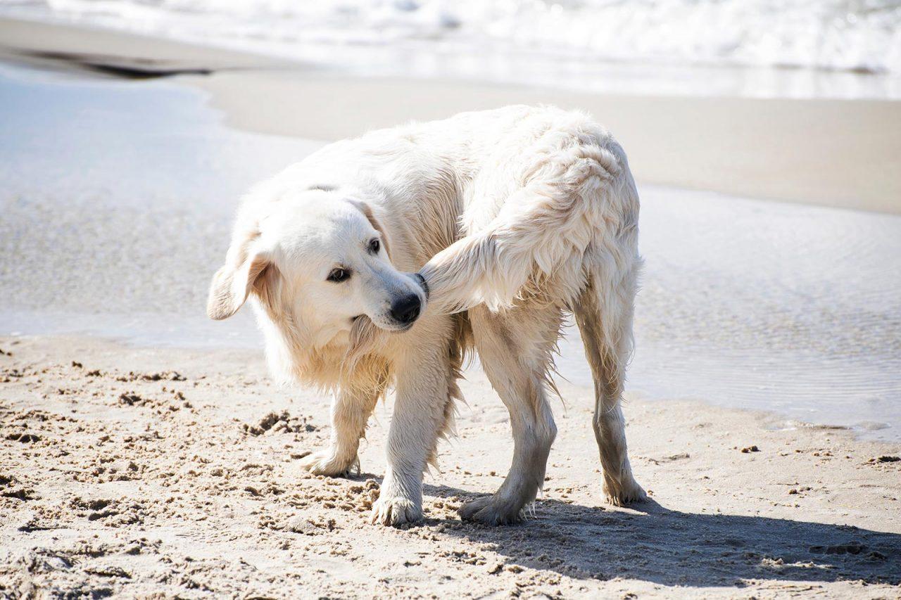 Σκύλος: Επτά λόγοι που κυνηγά την ουρά του – Πότε να ανησυχήσετε