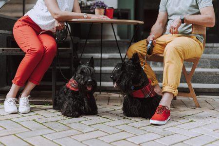 Σκύλος: Δεν κάθεται ήσυχος στο καφέ;Πώς θα τονηρεμήσετε