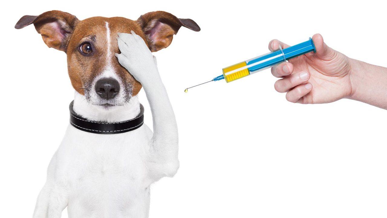 Κτηνίατρος: Τον φοβάται ο σκύλος; Πώς θα τον δει με καλό μάτι
