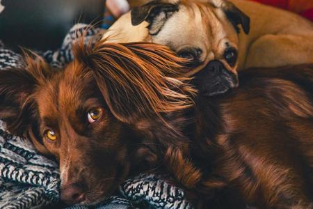 Ζώα συντροφιάς: Τι προβλέπει ο νέος νόμος για την προστασία τους και τις υποχρεώσεις των ιδιοκτητών