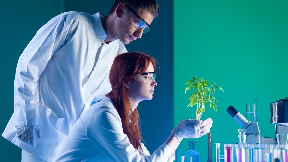 Καρκίνος Προστάτη: Το φυτό που υπόσχεται αποτελεσματική αντιμετώπιση