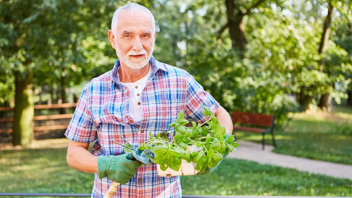 Νόσος Αλτσχάιμερ: Το πασίγνωστο αρωματικό βότανο που μας προστατεύει