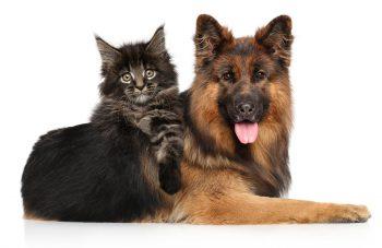 Τι πρέπει να κάνετε στον σκύλο σας μέχρι τον Μάρτιο – Ο νέος νόμος για τους ιδιοκτήτες ζώων συντροφιάς