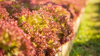 Το βαθυκόκκινο λαχανικό που προστατεύει τα μάτια και ρίχνει την πίεση