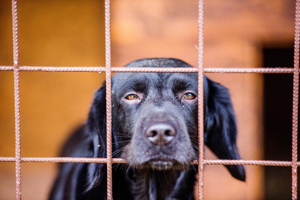 Yιοθεσία σκύλου από καταφύγιο: Όλα όσα πρέπει να ξέρετε